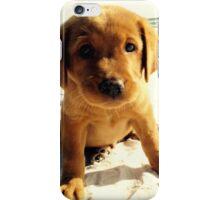 red puppy iPhone Case/Skin