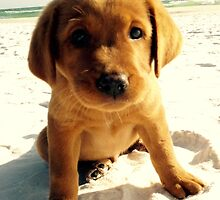 red puppy by jojoerwin