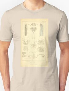 The Animal Kingdom by Georges Cuvier, PA Latreille, and Henry McMurtrie 1834  297 - Annelides Large Invertebrates or Worms Unisex T-Shirt