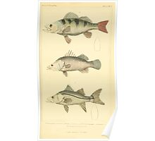 The Animal Kingdom by Georges Cuvier, PA Latreille, and Henry McMurtrie 1834  045 - Pisces Fish Poster