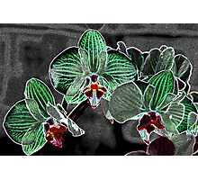 flowers on grey pattern Photographic Print