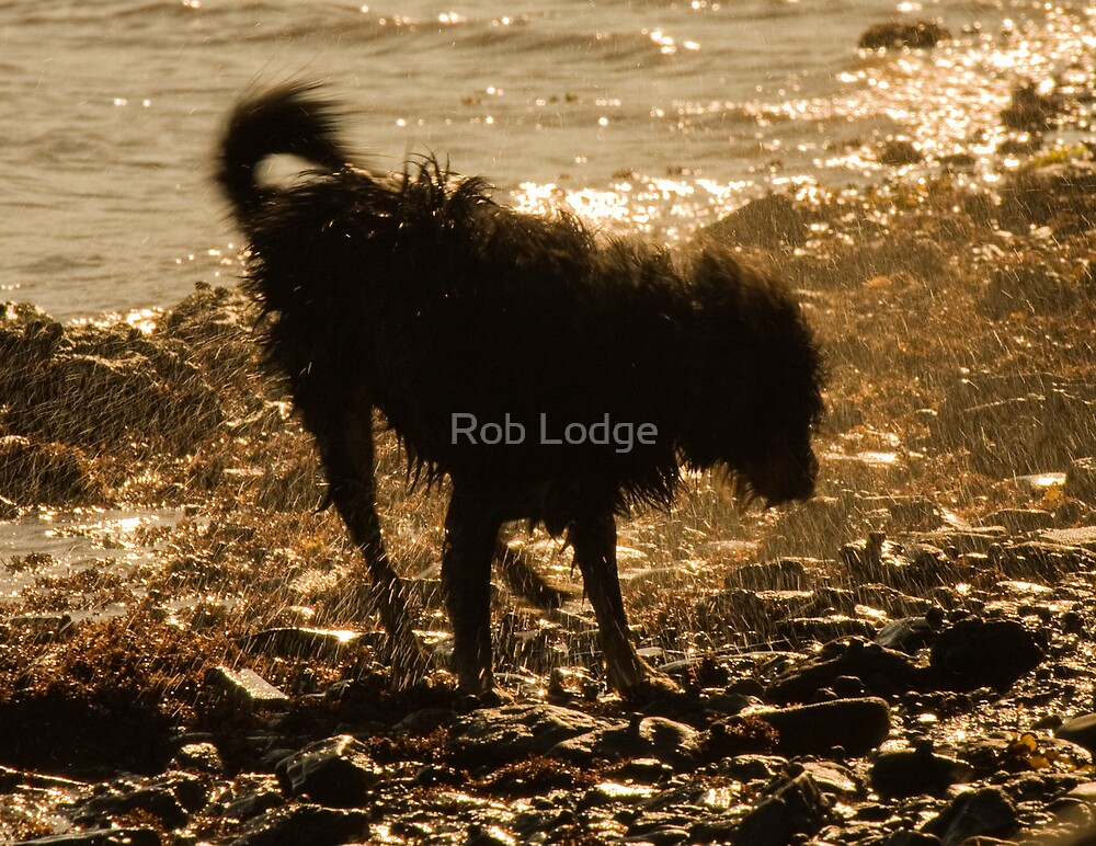 Shaggy Dog by Rob Lodge
