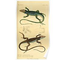 The Animal Kingdom by Georges Cuvier, PA Latreille, and Henry McMurtrie 1834  006 - Reptilia Reptiles Poster