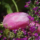 Raindrops on Tulips by lezvee