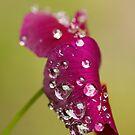 Wet through by Martina Fagan