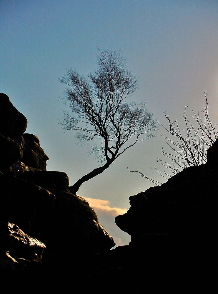 Tree From Rock by mfsphotography