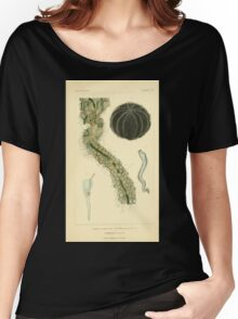 The Animal Kingdom by Georges Cuvier, PA Latreille, and Henry McMurtrie 1834  536 - Zoophytes Plant-Like Animals Women's Relaxed Fit T-Shirt