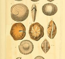 The Animal Kingdom by Georges Cuvier, PA Latreille, and Henry McMurtrie 1834  216 - Mollusca Mollusks by wetdryvac