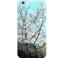 Laureana Cilento: flowering tree iPhone Case/Skin