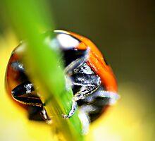 Ladybird by Lita Medinger