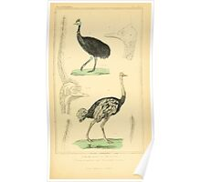 The Animal Kingdom by Georges Cuvier, PA Latreille, and Henry McMurtrie 1834 754 - Aves Avians Birds Poster