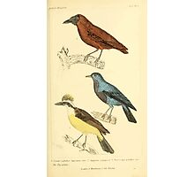 The Animal Kingdom by Georges Cuvier, PA Latreille, and Henry McMurtrie 1834 659 - Aves Avians Birds Photographic Print