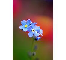 Tiny Blue Flower Photographic Print