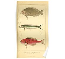 The Animal Kingdom by Georges Cuvier, PA Latreille, and Henry McMurtrie 1834  164 - Pisces Fish Poster