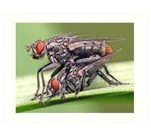 Mating Flies (1) ! Art Print