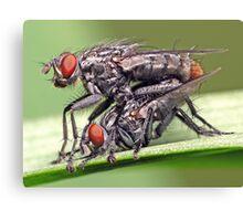 Mating Flies (1) ! Canvas Print