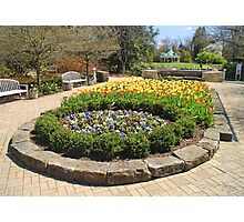 Tulip Time In Mill Creek Park Photographic Print