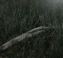Driftwood in the Reed by Sarita76