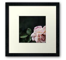 Graceful and Elegant Rose Framed Print