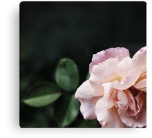 Graceful and Elegant Rose Canvas Print