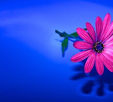 Flower On Blue #2 by Eduard Gorobets
