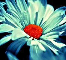 Big Beautiful Blue  by terrebo