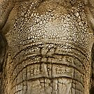 African Elephant by Sean McConnery