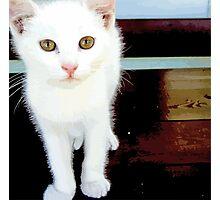 White kitten Photographic Print