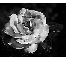 textured flower Photographic Print