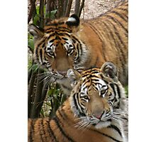 Young Cubs Photographic Print