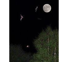 4 bats, one moon Photographic Print