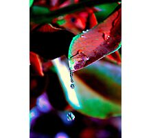 Drop of water for the spirit of the Earth Photographic Print