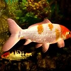 Pink And Orange Gold Fish by terrebo