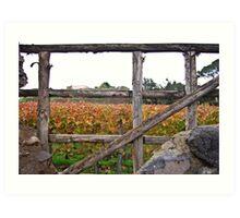 Vineyard at Pompeii, Italy Art Print