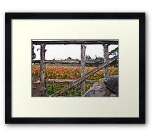 Vineyard at Pompeii, Italy Framed Print