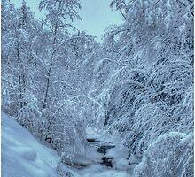 Blue Light on New Snow by Wayne King