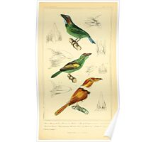 The Animal Kingdom by Georges Cuvier, PA Latreille, and Henry McMurtrie 1834 703 - Aves Avians Birds Poster