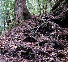 Forest Floor by cradlemountain