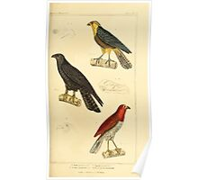 The Animal Kingdom by Georges Cuvier, PA Latreille, and Henry McMurtrie 1834 644 - Aves Avians Birds Poster