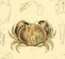 The Animal Kingdom by Georges Cuvier, PA Latreille, and Henry McMurtrie 1834  307 - Crustacea Crustaeans Sticker