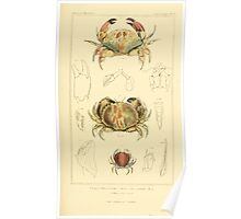 The Animal Kingdom by Georges Cuvier, PA Latreille, and Henry McMurtrie 1834  307 - Crustacea Crustaeans Poster