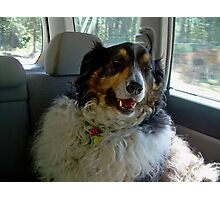 """Buddy Sings along with """"Down Town"""" Photographic Print"""