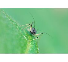 insect unknown Photographic Print