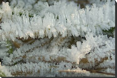 Fascinating Ice crystals 6 by steppeland