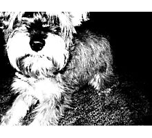 Snickerdoodle Pooch Photographic Print