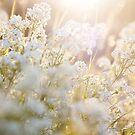 sunshine by JorunnSjofn Gudlaugsdottir