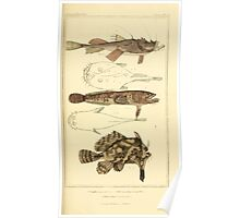 The Animal Kingdom by Georges Cuvier, PA Latreille, and Henry McMurtrie 1834  162 - Pisces Fish Poster