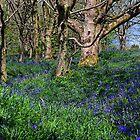 Bluebell Woods, Eype, Dorset UK by lynn carter
