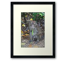 Philippine Long-Tailed Macaque Framed Print