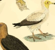 The Animal Kingdom by Georges Cuvier, PA Latreille, and Henry McMurtrie 1834 642 - Aves Avians Birds Sticker